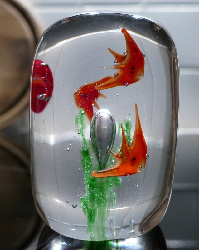 murano aquarium paperweight mit 5 fischen und luftblasenalge 8 2 cm ebay. Black Bedroom Furniture Sets. Home Design Ideas