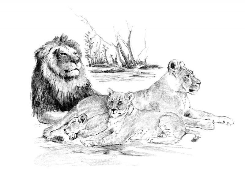 Malvorlagen Löwenfamilie | My blog