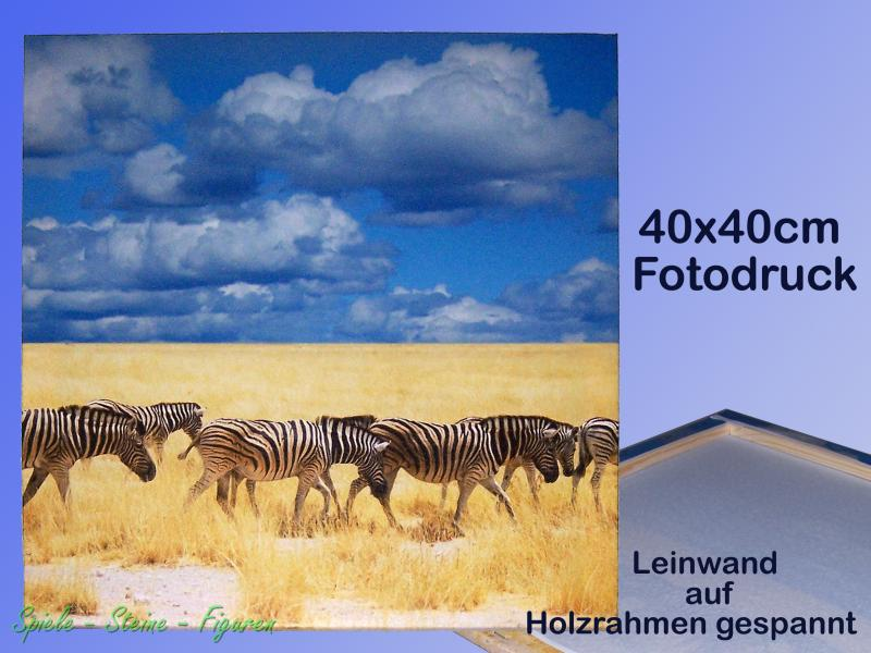 afrika savanne zebra herde 40x40cm fotodruck leinwand auf. Black Bedroom Furniture Sets. Home Design Ideas
