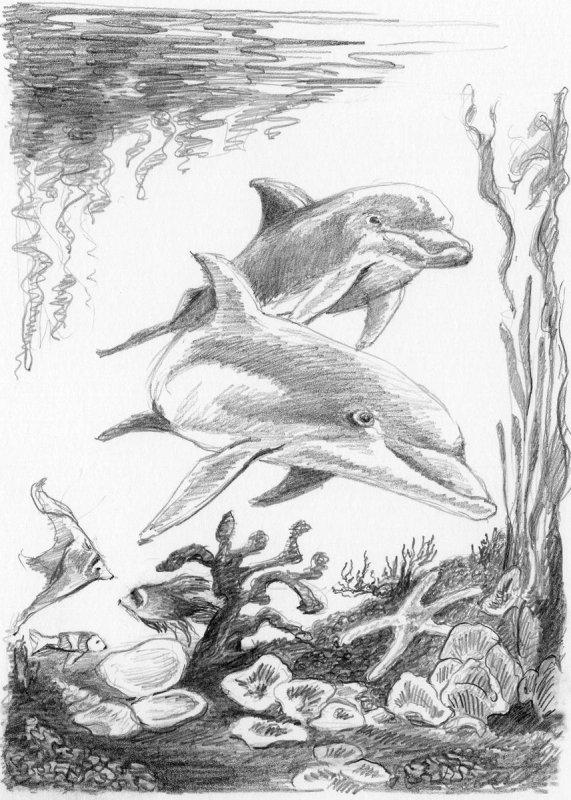 sketching  skizzieren  malen mit bleistift  delfine